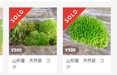 そこらで取ってきた苔を販売してみた結果…売れました!