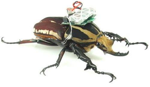 【AI 2045】AIの昆虫サイボーグ